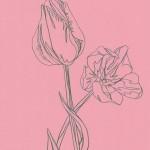 Ellen Williams Tulip 2 Wychwood Art -4ad6b649