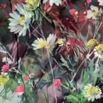 Jo Haran Daisy Array Wychwood Art 8-c18d3176