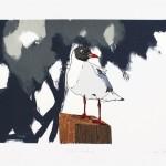 black headed gull full square2-68defaae