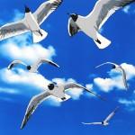 colony of bh gulls artwork-ddd8e84e