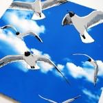 colony of bh gulls2 web-6bdb4ce8