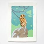 fiona hamilton meerkat square-147e2070