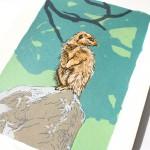 meerkat-detail1-f4248568