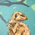 meerkat-detail2-93567823