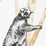 ring tailed lemur print detail 1-c1863708