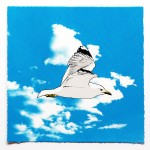 seagull-in-flight-full-95134ec9