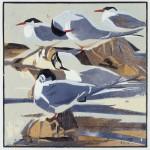 thumbnail_Arctic Terns-31e7efcf