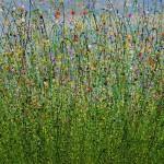 Natures Splendor (4)-9eb07001