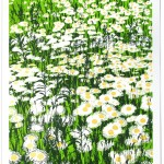 Daisy Field_Chris-Kegan-Wychwood Art-f1aa191b