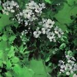 Jo Haran Delight in Green Wychwood Art 1-aad55f5f