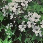 Jo Haran Delight in Green Wychwood Art 5-61483ffc