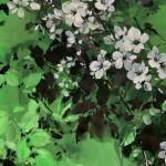 Jo Haran Delight in Green Wychwood Art 7-fcbcabcf
