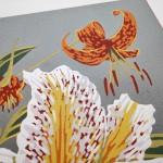 Woodland Lilies closer up-625c98fd
