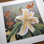 Woodland Lilies unmounted-04b67ee8
