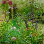 hampshire garden i dylan lloyd-84fd5320